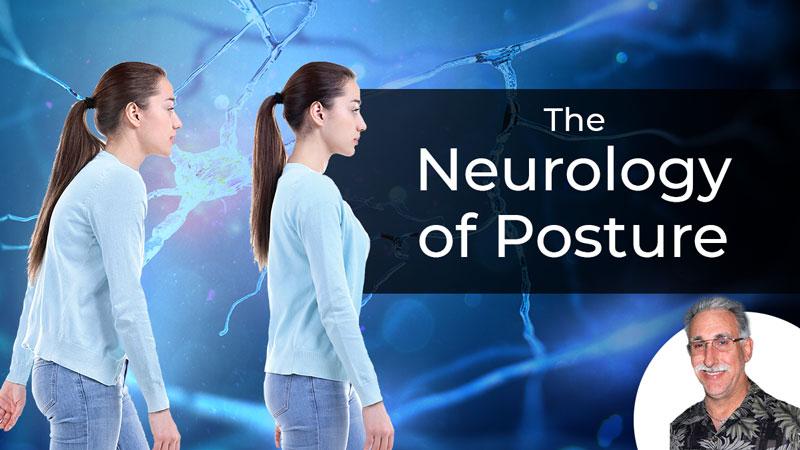 The Neurology of Posture