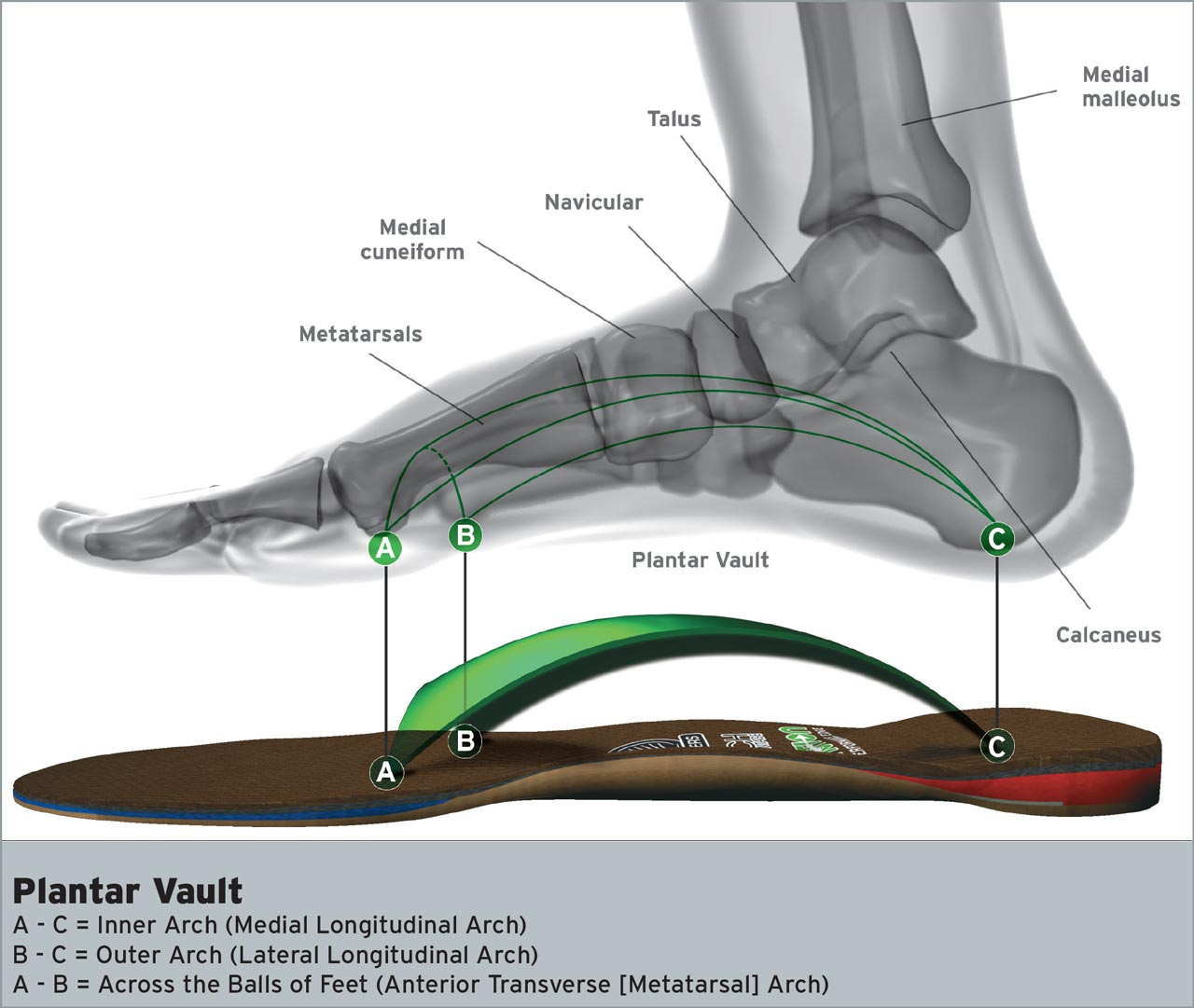 Plantar Vault: 3 Arches in Your Feet
